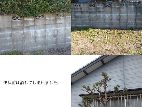 知人宅の庭、伐採