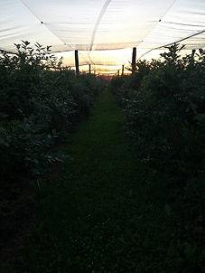 Kmetija pri Ljubljanscevih2.jpg