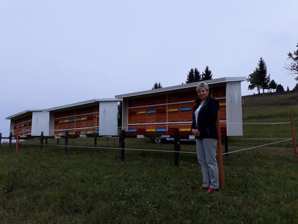 Čebelarstvo Tatjana Grdadolnik
