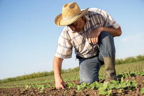 Dvignimo dodano vrednost pridelkov in izdelkov na kmetijah za lokalni trg