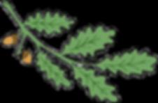 Eichenblätter_Logo_Projektfreigestellt.p