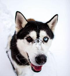 husky-radka-kocanova-uewc-unsplash.jpg