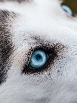 chien-traineau-hybrid-unsplash.jpg
