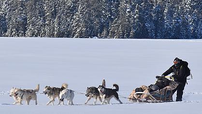 chien-traineau-lac-altai-canada-tibow-19