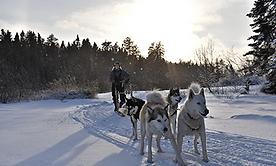 chien-traineau-altai-canada-tibow-400-24
