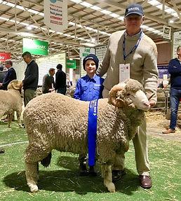 Borambil ram bendigo sheep and wool show champion
