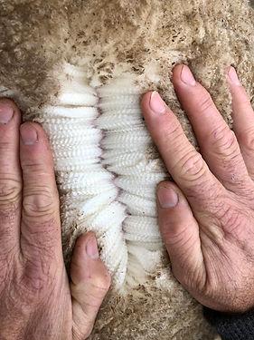Wool open 1 27 May 20.jpg