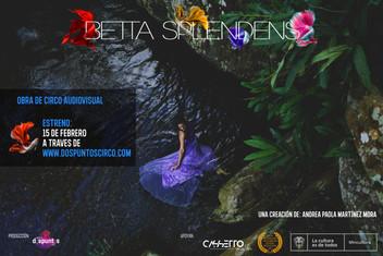 Betta Splendens en estreno!
