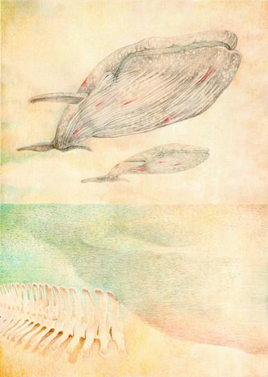 Il posto delle balene | 2018