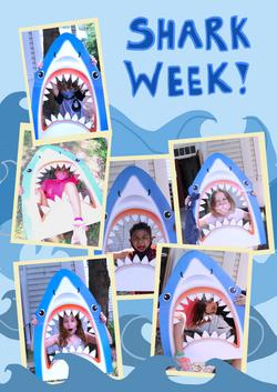 Week 6 p3 sharks