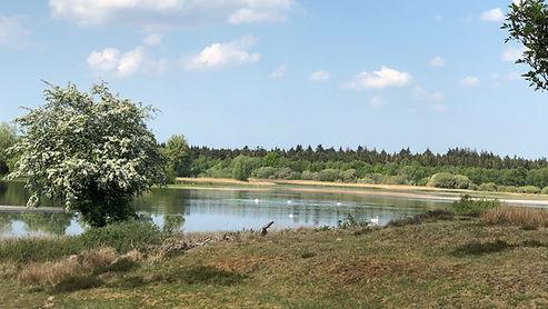Hier ziet u de omgeving van minicamping het Hijkerveld. De natuur rondom de camping is prachtig.