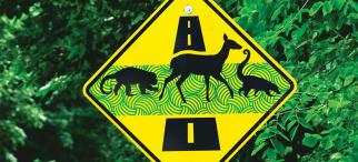Señales para reducir atropello de animales silvestres.
