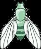 Drosophile2.png