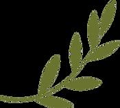 kisspng-olive-branch-peace-symbols-olive