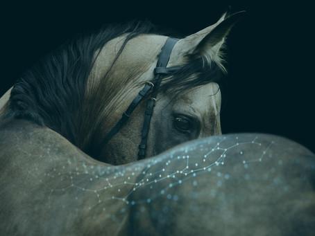High Tech Podcast - Is de paardensport klaar voor slimme technologie?