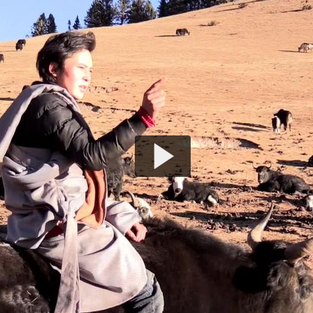 Nomads from Nyimalung Herding Yaks
