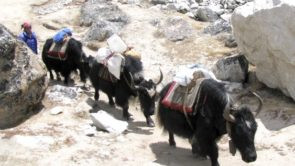 Trekking in Nepal with USYAKS