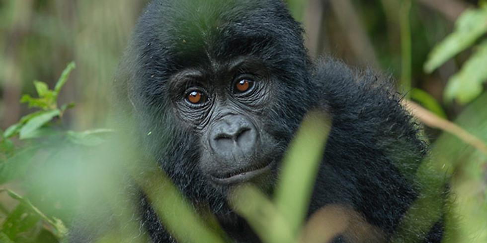 3 Day Mountain Gorilla Trekking in Uganda