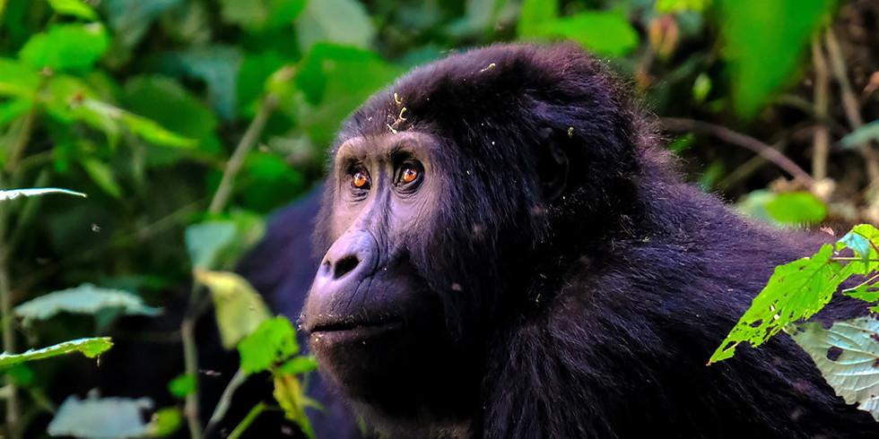 13 Day Rwanda & Uganda Safaris