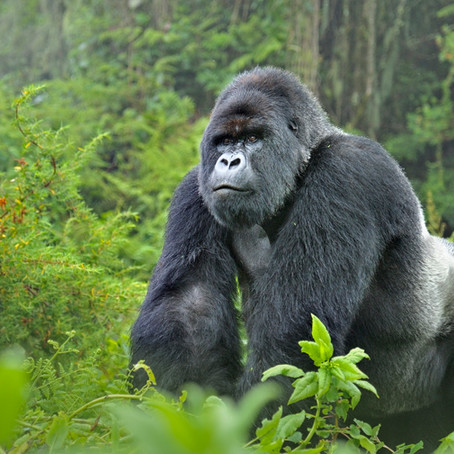 Virunga: Where your heart finds the Heart of Africa