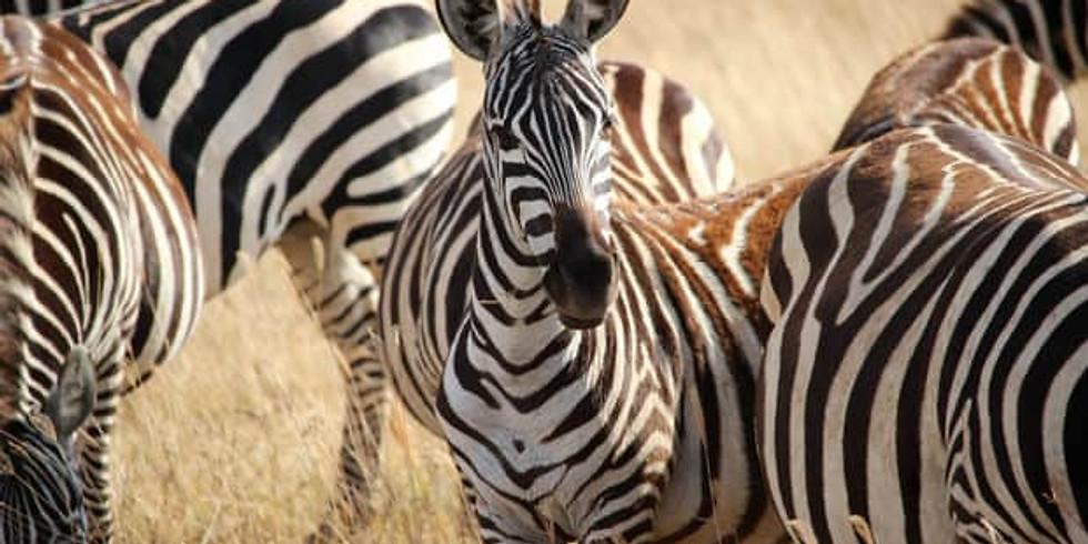 18 Day Rwanda And Uganda Safaris