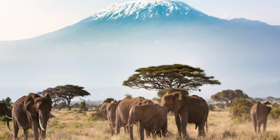 18 Day Kenya & Tanzania Budget Safari