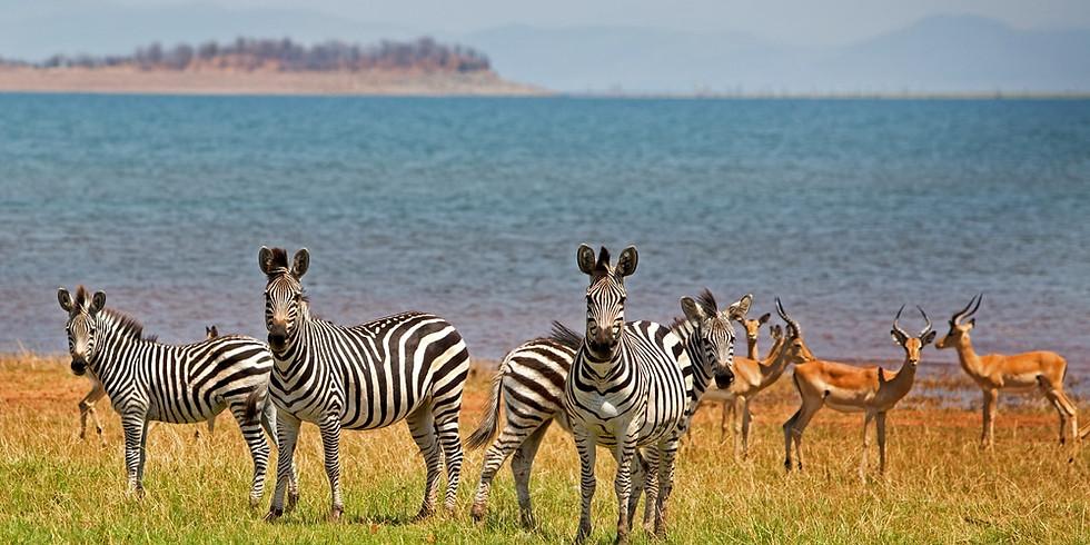 11 Day Multi-Experience Safaris