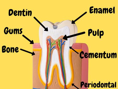 Enamel Basics