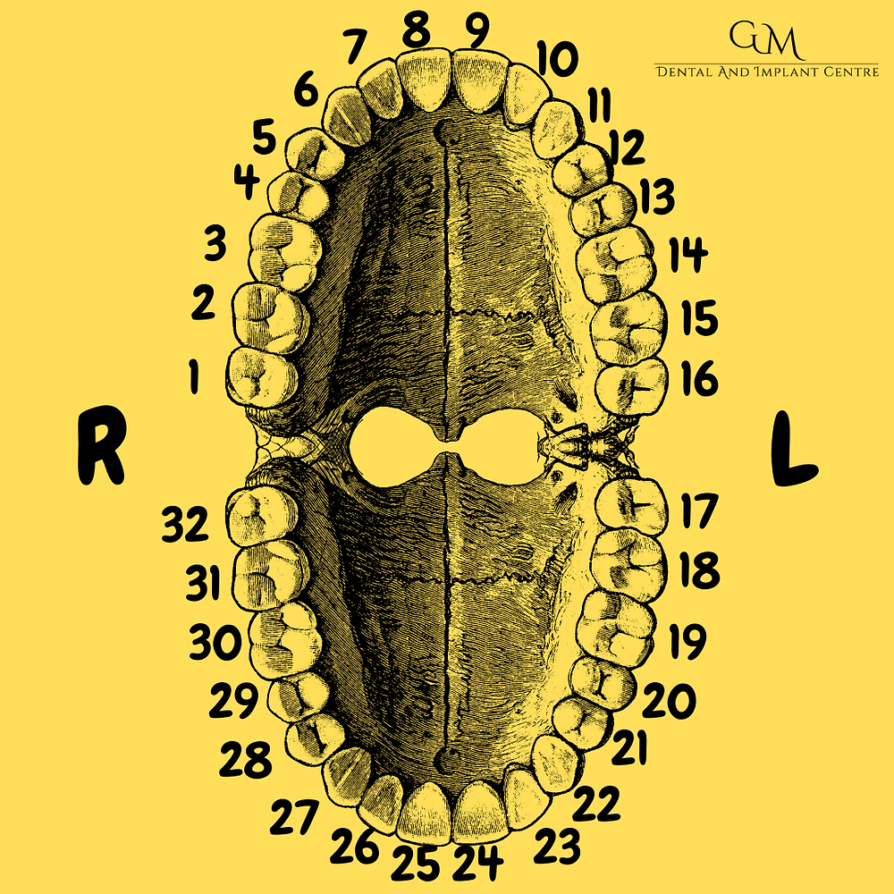 Types of Teeth and numbering