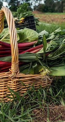Certified Organic Fruit & Veg Box – LARGE