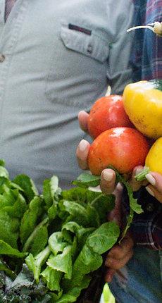 Certified Organic Fruit & Veg Box – SMALL