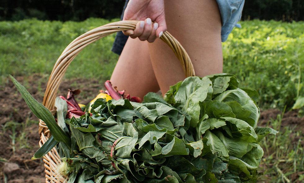 Certified Organic Fruit & Veg Box – FAMILY