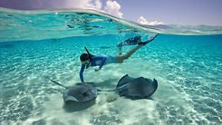 Swimming with stingrays in the best activity in Grand Cayman