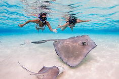 Swimming with Stingrays in Grand Cayman thanks to Aqua Watersports
