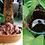 Thumbnail: Kit - Mimosa Hostilis/Banisteriopsis Caapi YELLOW 30X