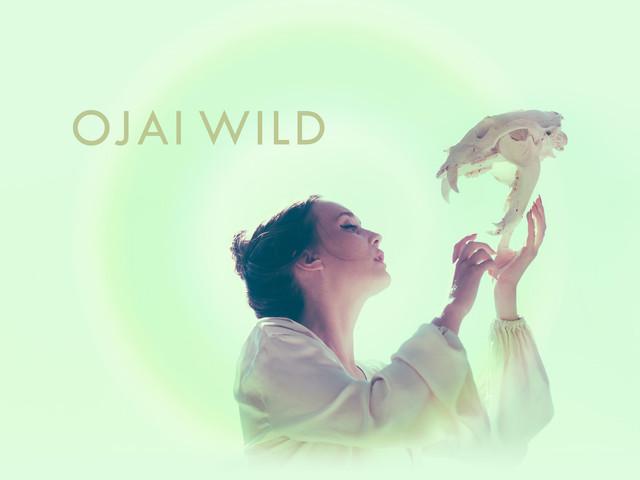 ojai-wild-logo-skull.jpg