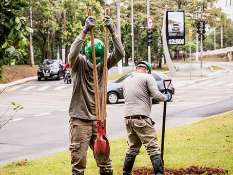 Projeto substitui postes de eletricidade por árvores na Vila Olímpia