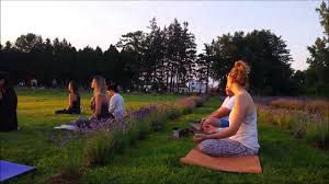 yoga in the lavender.jpeg