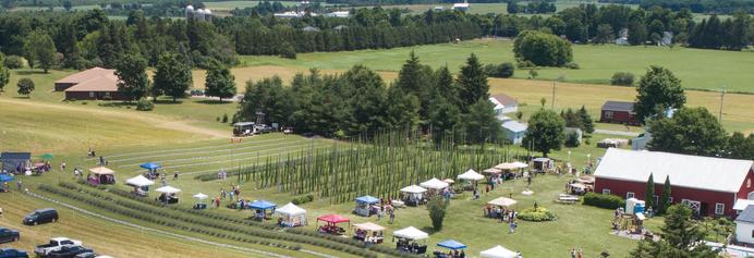 Lavender Festival   Hopenhagen Farm   Local Upstate NY Hops