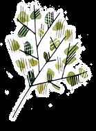 Roślinka 3.png