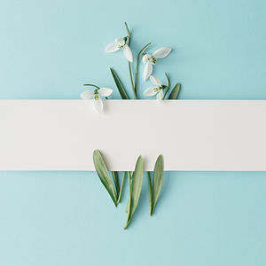 Creative layout made with snowdrop flowe