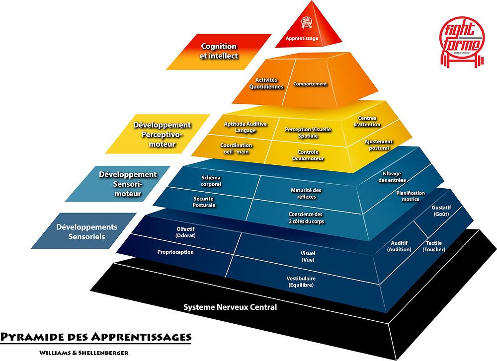 Pyramide des apprentissages de Williams et Shellenberger