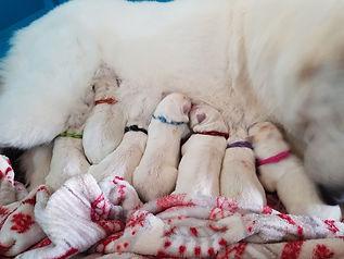 7 puppies day 0.jpg