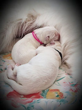 Pups day 1.jpg