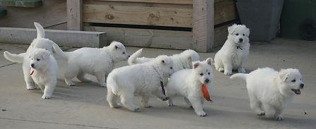 6 weeks pups 1.jpg