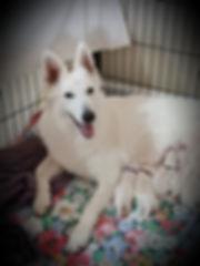 Lola pups just born.jpg