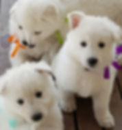 38 days pups.jpg