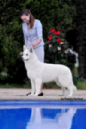 Leon standing by pool.jpg