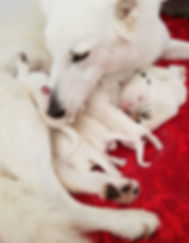 Lola and pups day 2.jpg