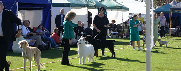 Khaleesi at best in show line up - Colac